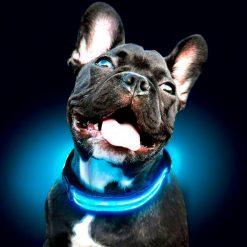 plein-de-gadget-collier-lumineux-pour-chien-1